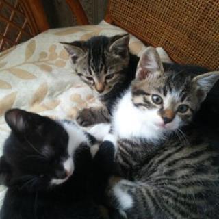 ◆譲渡終了しました◆子猫の里親さん募集(生後2ヶ月)
