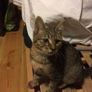 雄の子猫の飼い主さんを募集しています。