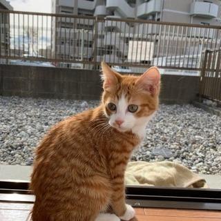 春日井市 猫3匹