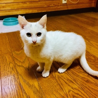 子猫 3カ月の男の子です