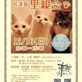ネコット里親会 12/16日曜日