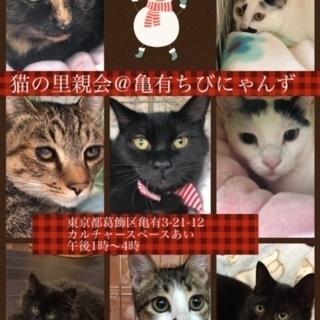 12/16猫の里親会@亀有