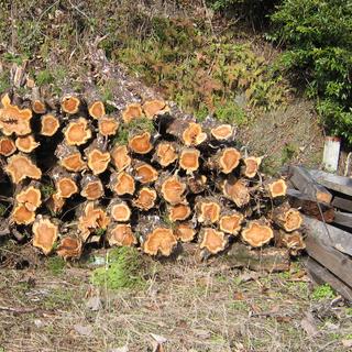 ★【あげます!】★【無料です!】 薪 マキ まき 廃材 木材 燃...