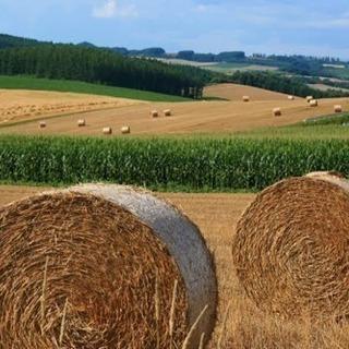 ◆牧場スタッフ募集中!未経験からどなたでも始められます。