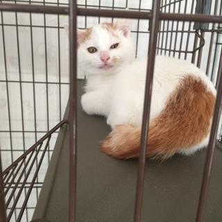 3ヶ月くらいの男の子 - 猫