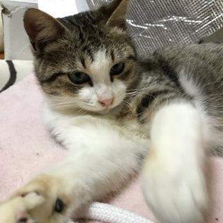人が大好きな甘えん坊の小柄なオス猫