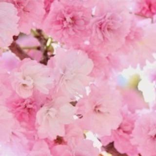 姫路市で🌲植木屋を営んでおります🌲お気軽に問い合わせ下さい🙇♂️