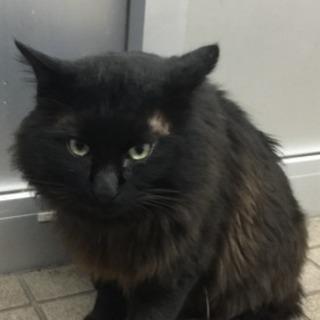 黒猫長毛猫   2歳半