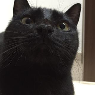 黒猫 里親募集