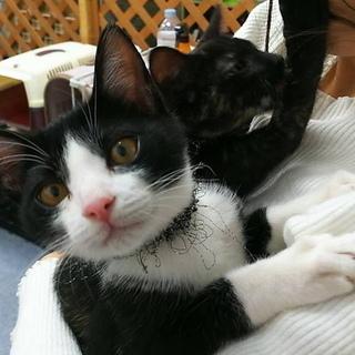 生後6か月、甘味兄妹の栗&かのこちゃんとお見合いしてみませんか。