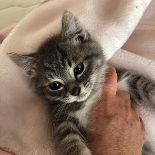 生後一カ月半くらいの可愛いオス猫