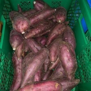 サツマイモ  千葉県産  15キロ‼︎