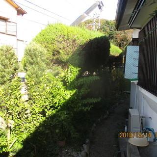 福岡県、カイズカの木徹去、不要な木、格安、クレーン作業、短時間