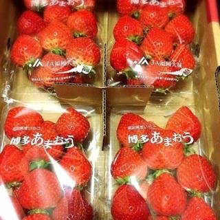 あまおう苺の収穫その他 自然が好きな方急募☆