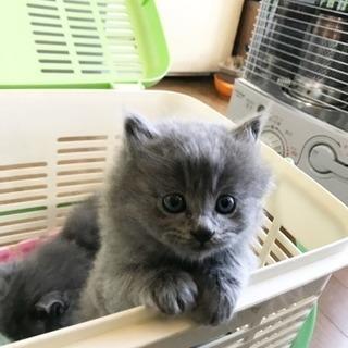 子猫 里親募集中