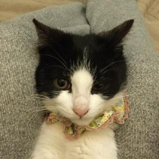 黒白ハチワレのマチ子ちゃん、3カ月