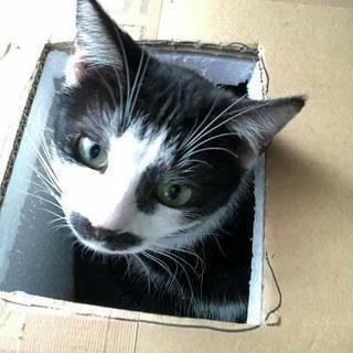多頭飼育崩壊現場の成猫
