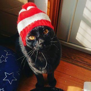 かっこかわいい黒猫こくとう(仮)ちゃん