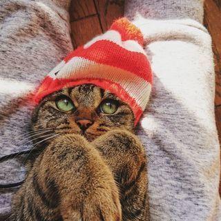 永遠の子猫顔、メギちゃん