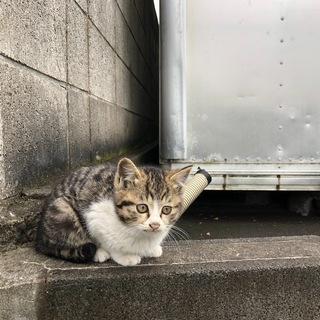 生後4か月弱の子猫