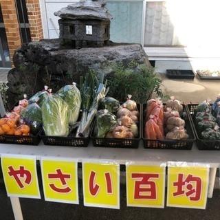 野菜販売100市場ლ(^o^ლ)