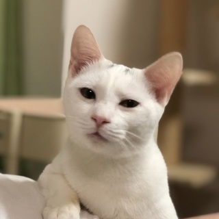 生後4〜5ヶ月の甘えん坊の白猫君