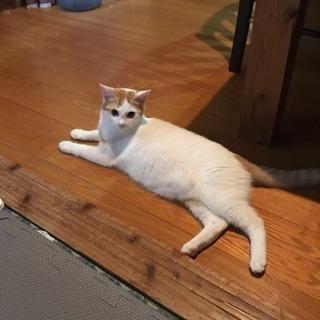 生後6ヶ月の猫