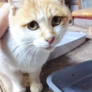 🆘可愛いメス猫🐈️ 避妊手術済み