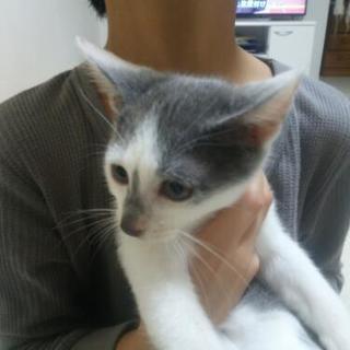 2ヶ月半の子猫ちゃん3匹の里親さん募集