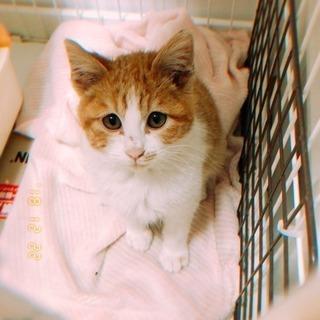 大人猫についてきた茶白の男の子(5ヶ月くらい)