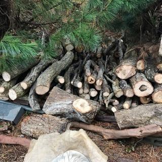椎茸原木栽培しませんか。