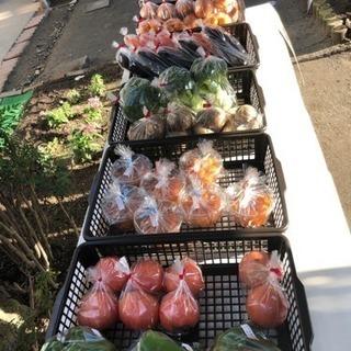 野菜販売100円市場*\(^o^)/*