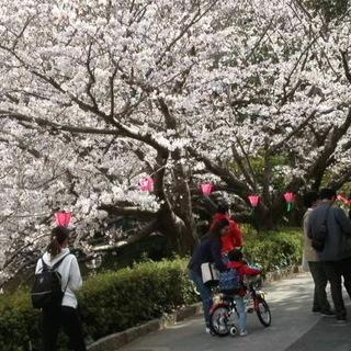 出店者募集!第60回アース・エコ・フェア浜松城公園2021(3/27‐3/29) − 静岡県