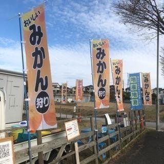 ケーファーム  みかん狩り(11月OPEN)