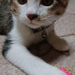 6か月美人三毛猫♪
