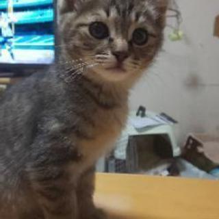 里親さん募集です。子猫二匹です。