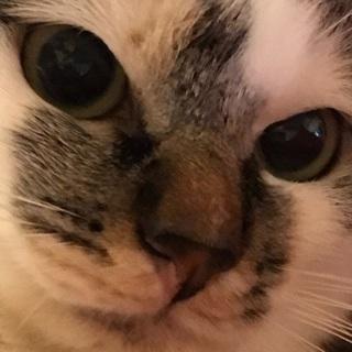 1歳の猫ちゃん貰って下さい。