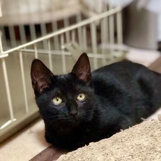 生後2か月の可愛い黒猫ちゃん