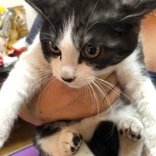 寂しがり屋の白黒子猫ちゃん
