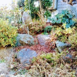 庭石 植木 多数
