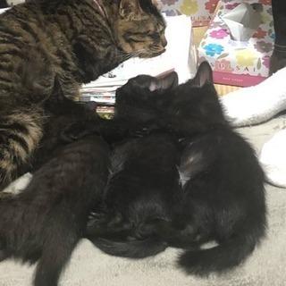 2ヶ月の黒猫みんな男の子です。