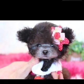 ★ペットショップで可愛い子犬の撮影をしてくれるカメラマンさん募集★