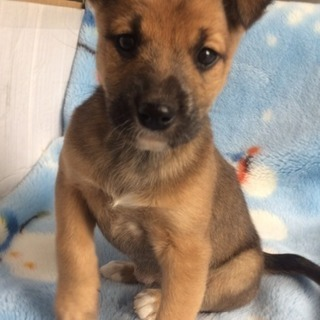 子犬 メス2カ月