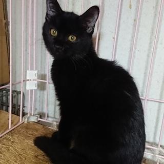 大きな目をした可愛い長毛の黒猫!