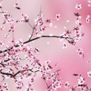 🌳姫路市で🌳植木屋を営んおります🌳お気軽にお問い合わせ下さい🌳