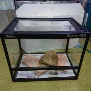 爬虫類ケージ Repro450とシェルター、敷石