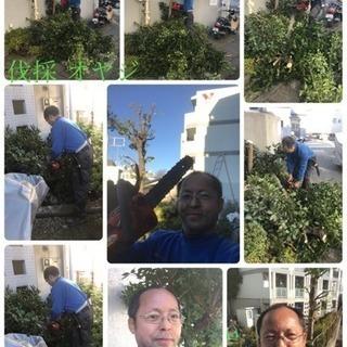 木の伐採 剪定なら 庭の手入れ店ツチヤガーデンホームへ【所沢市 ...