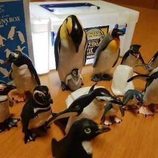 【1月20日受付最終日】PENGUINS BOX ペンギンズ・ボックス