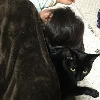 16歳の静かな黒猫(♀)毛並みが綺麗!手で水飲みます