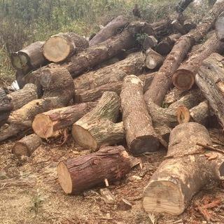 【阿見町飯倉】丸太あげます 杉など数十本 薪ストーブ・暖炉の燃料...